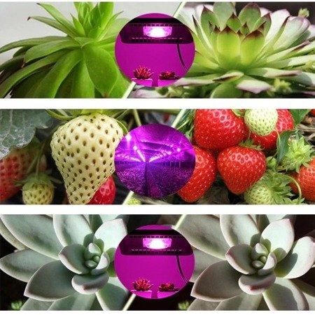 Dioda Power LED 1W - 30-40lm - Full Spectrum - 400-840nm - do uprawy roślin i kwiatów